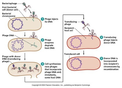 Generalised transduction