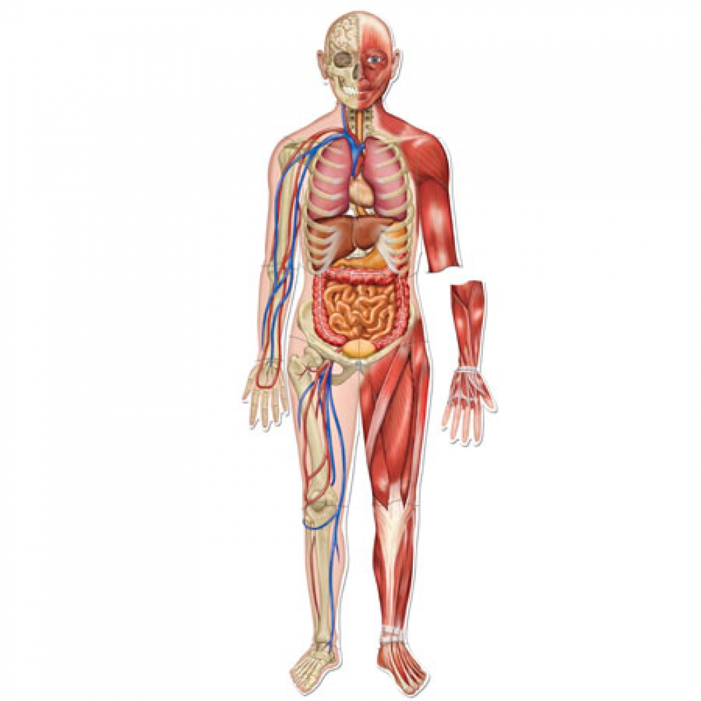 the human body Your body is a brilliant machine with many important parts watch movies, read articles, and do activities to find out more.