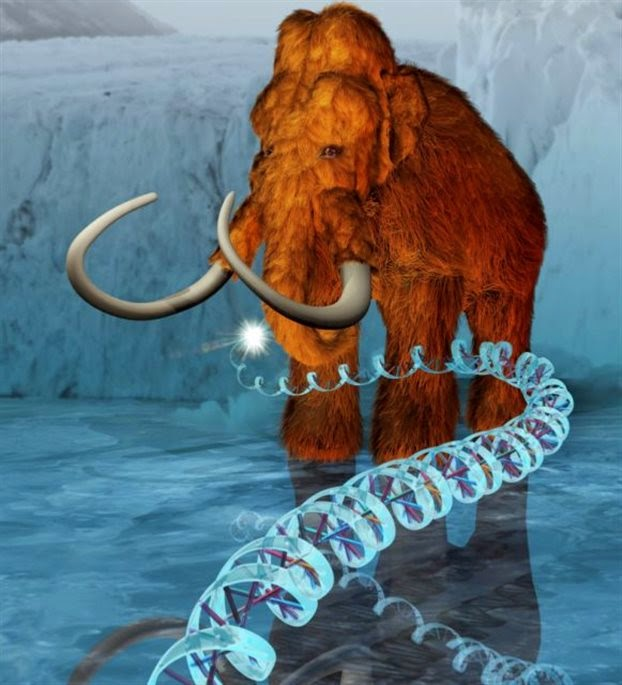 Αποκωδικοποίησαν το DNA των μαμούθ
