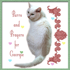 Purring for Georgie.