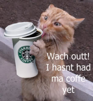 Cat Drinking Coffee