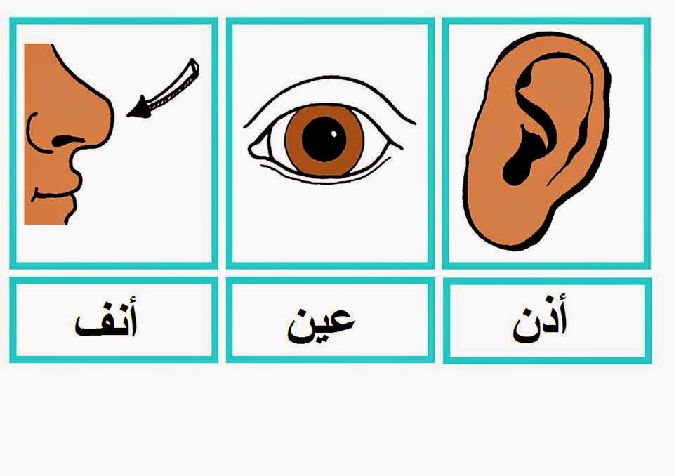 بطاقات جسم الانسان