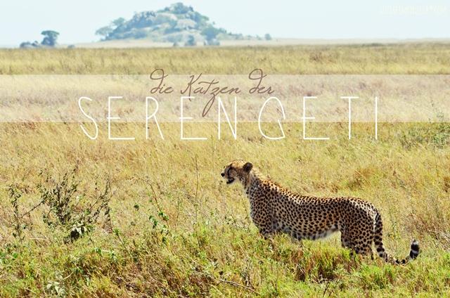 luzia pimpinella   travel tansania   safari in der serengeti - gepard