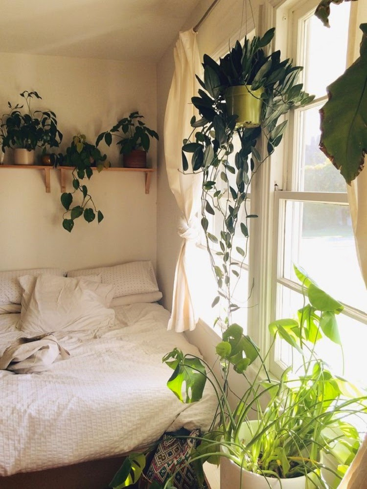 gypsyaya plants in bohemian bedrooms