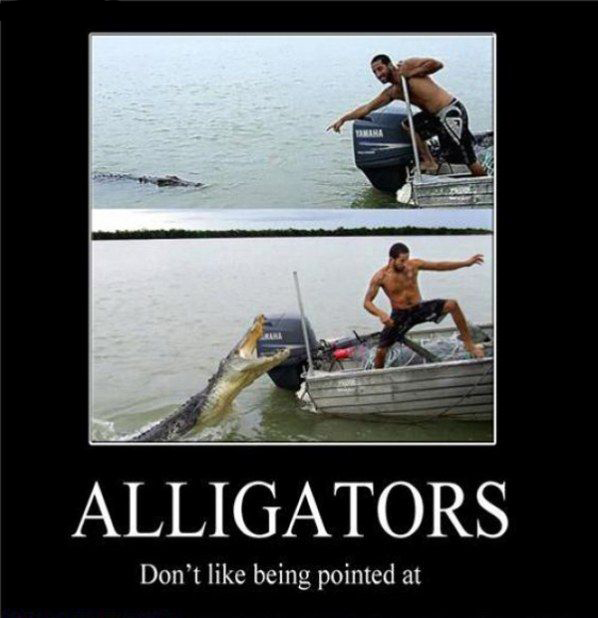 Alligators - Don't Like Being Pointed At