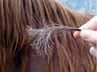 أسباب تقصف الشعر وطرق الوقايه منه ووطرق علاجه