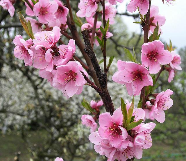 Rootwork4u: Rootwork Blossoms