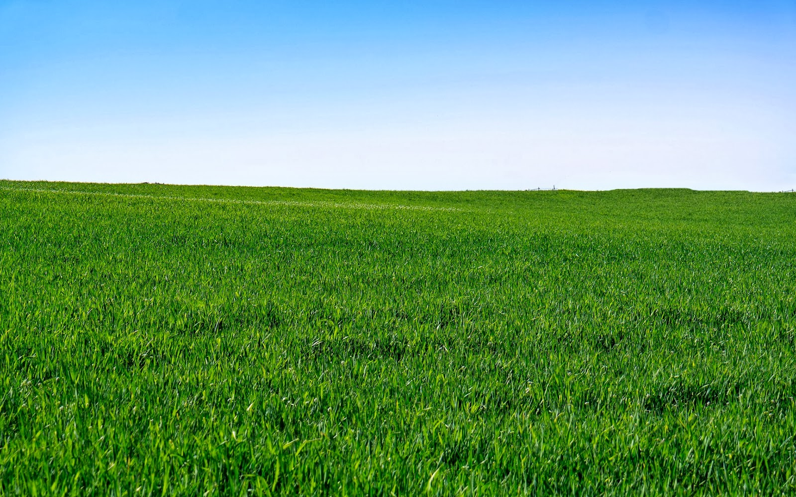 Lush Green Grass Nature Full HD Desktop Backgrounds Images Wallpapers Free