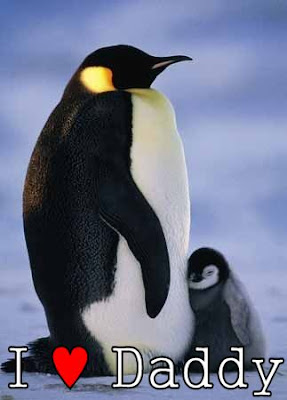 Penguin's love their daddies