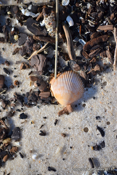 Seashell Natural Photo Essay