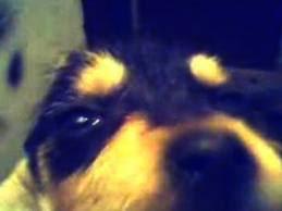 Tortura a un cachorro durante horas y graba su agonía
