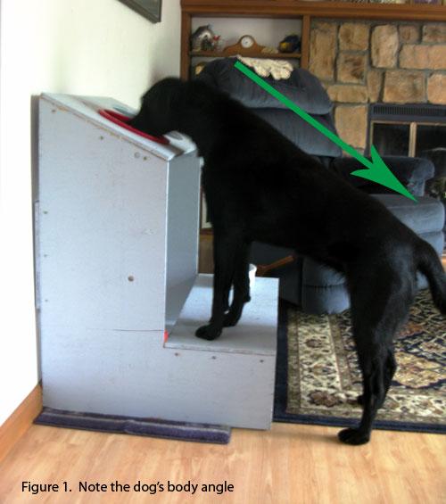 cães com megaesofago