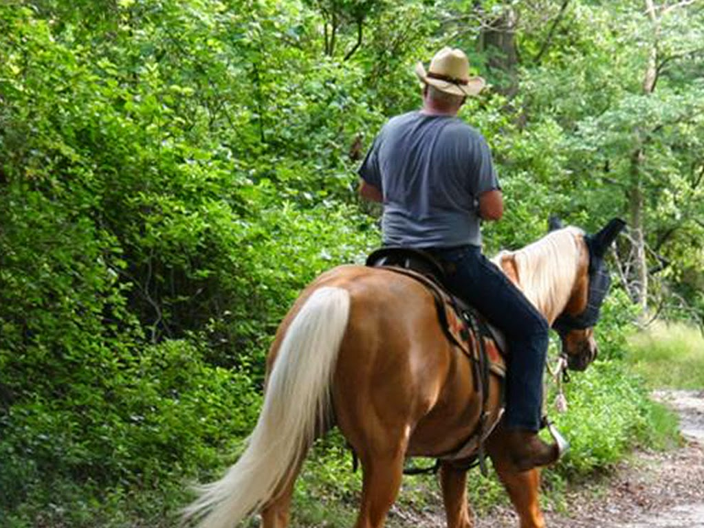 Trail Riding in the Great Smoky Mountains