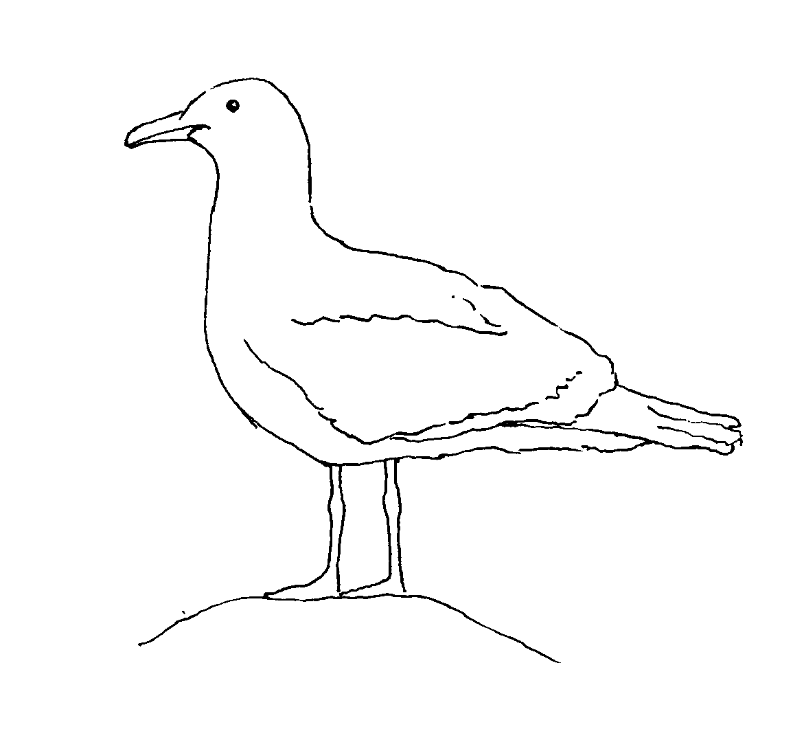 seagull in flight coloring pages - photo#27