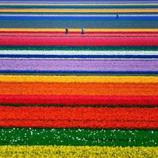 listas de flores de colores Paisajes con flores naturales