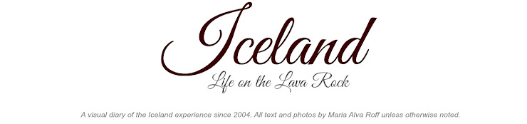 Iceland ~ Life on the Lava Rock