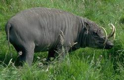 Fauna khas Sulawesi....!!!
