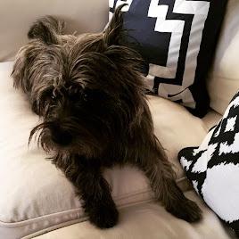 Sweet Maisie