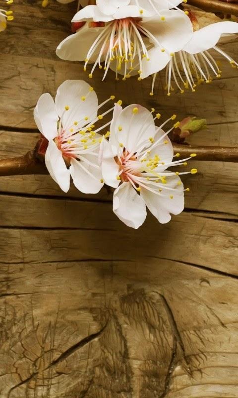 Hinh nen hoa dao dep cho iphone