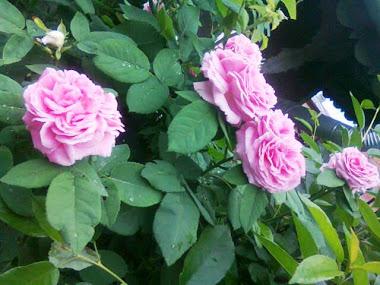 Flori de mai 2012