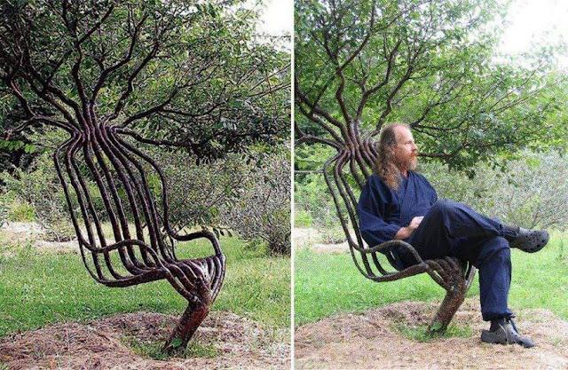 living garden chair using tree shaping methods