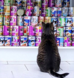 A cat looking at stacks of canned diets
