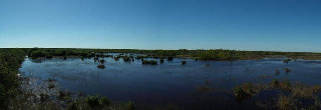 Las gigantescas ciénagas y manglares del Sunshine State