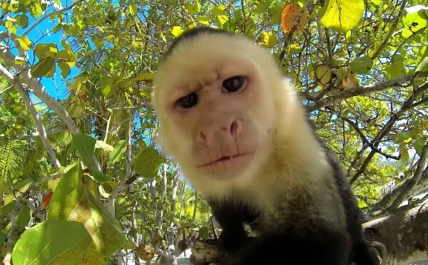 Funny animals of the week - 7 March 2014 (40 pics), monkey takes a selfie