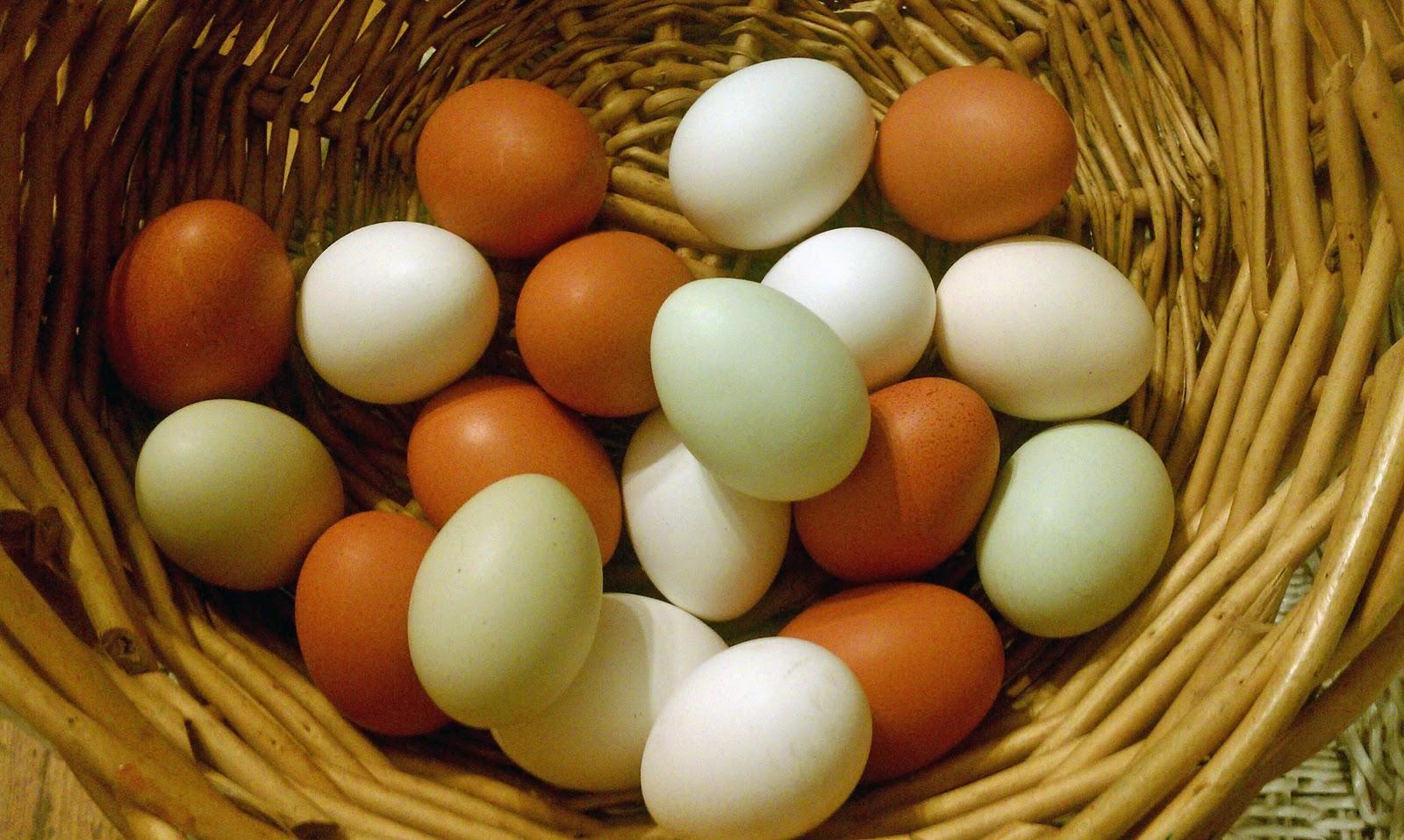 how to clean farm fresh eggs