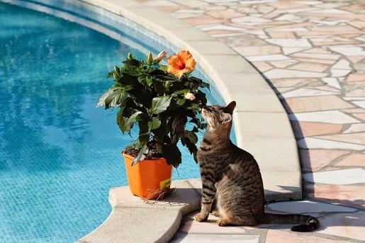Jak przystosować ogród dla kota