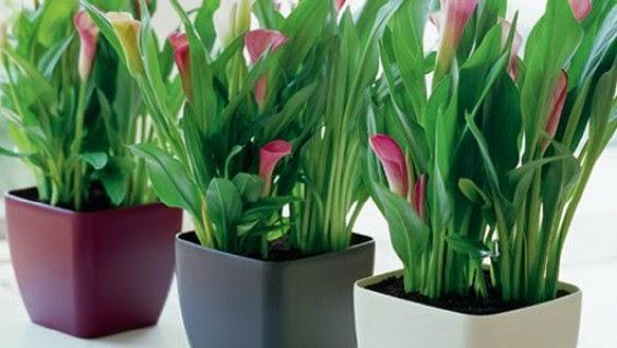 Conseils d co et relooking les plantes d 39 int rieur for Les plantes d interieur