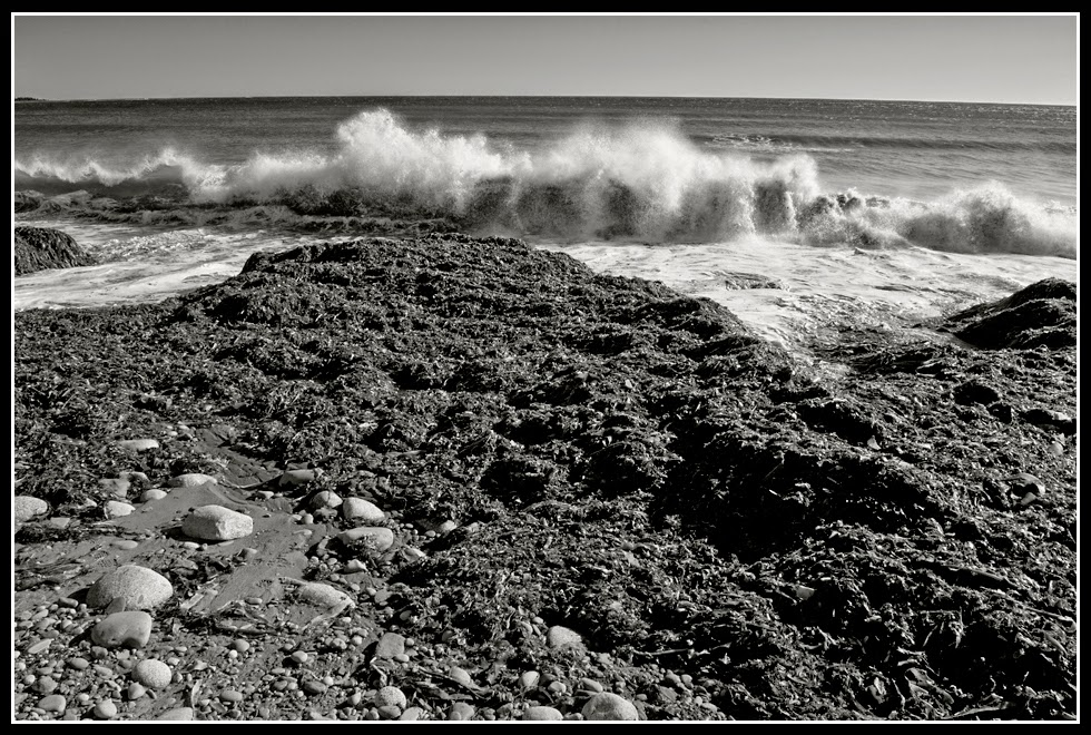Nova Scotia; Hirtle's Beach; Rocks; Seaweed; Atlantic Ocean