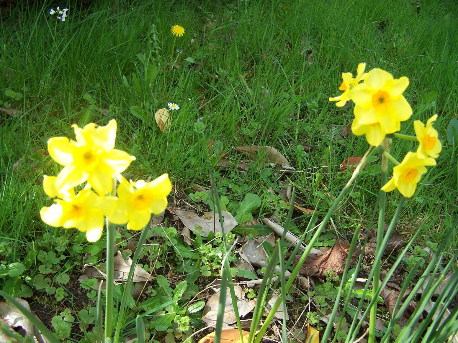 Bienvenue dans mon jardin a fill sur sarthe les for Fleurs jardin printemps