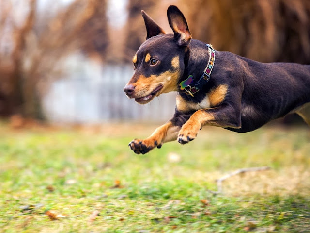 "<img src=""http://4.bp.blogspot.com/--o2acclklZ0/Uq8O7XqBaKI/AAAAAAAAFoY/Ao-Vq7NmLLE/s1600/asaa.jpeg"" alt=""dogs animal wallpapers"" />"
