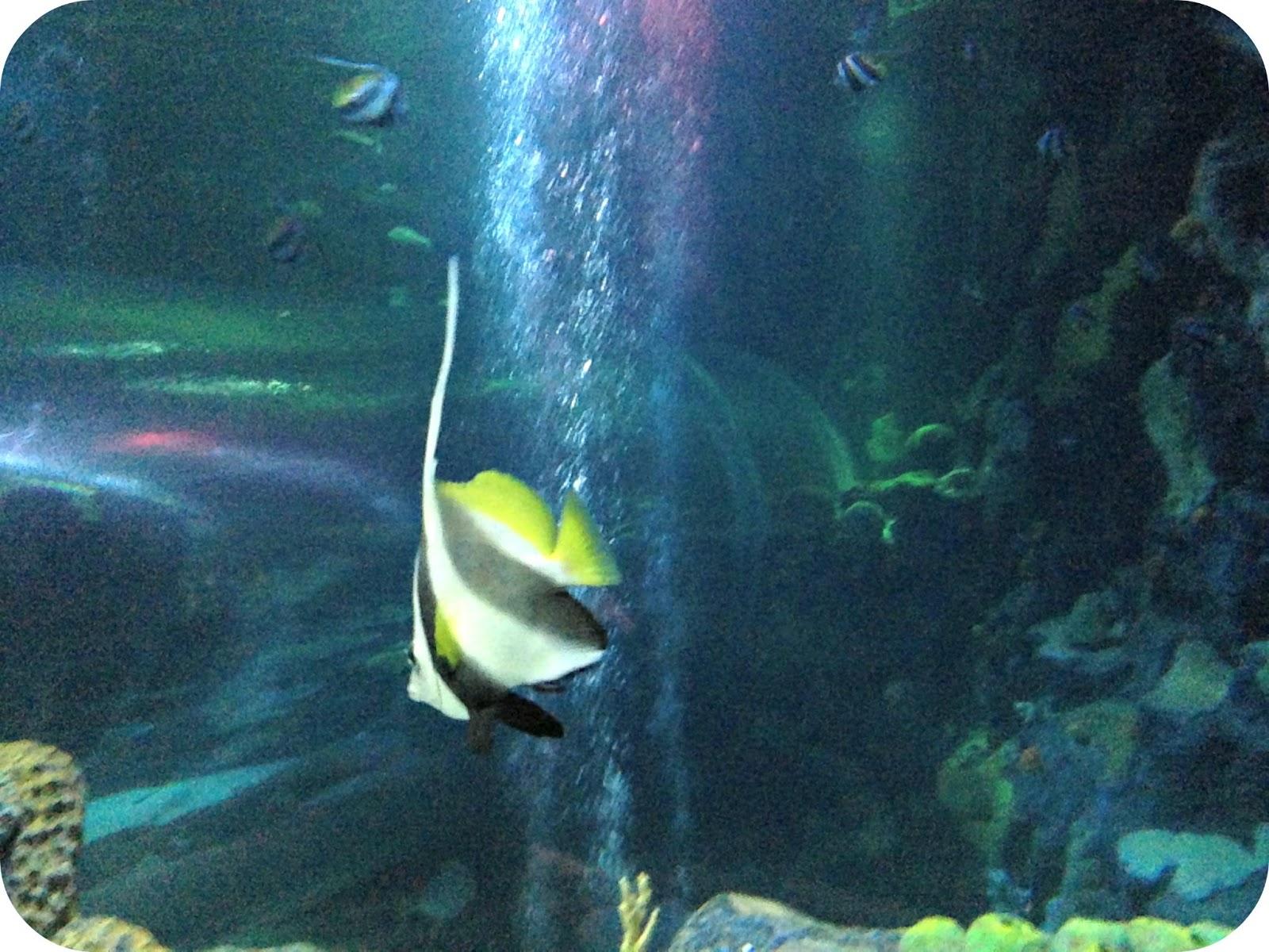 Life Unexpected: Birmingham Sea Life Centre