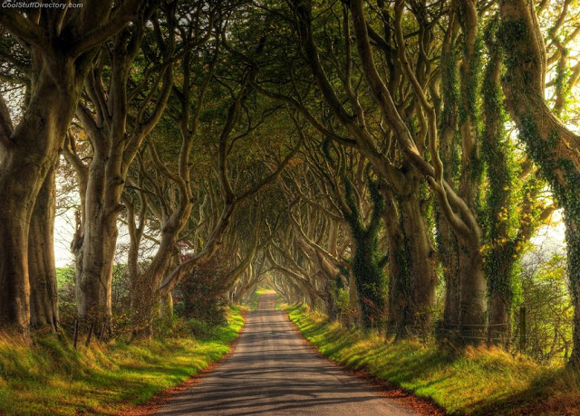 The Majestic Dark Hedges Photography