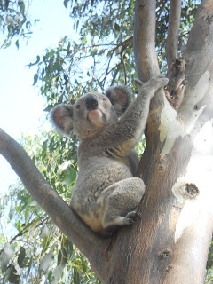 Koalas and Lizards and Birds...oh my...!!