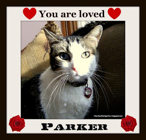 Purrz and Prayers for sweet Parker