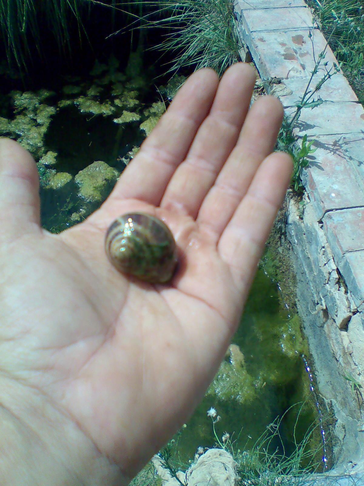 Aventuras en la palma d ebre caracoles for Caracoles de jardin que comen