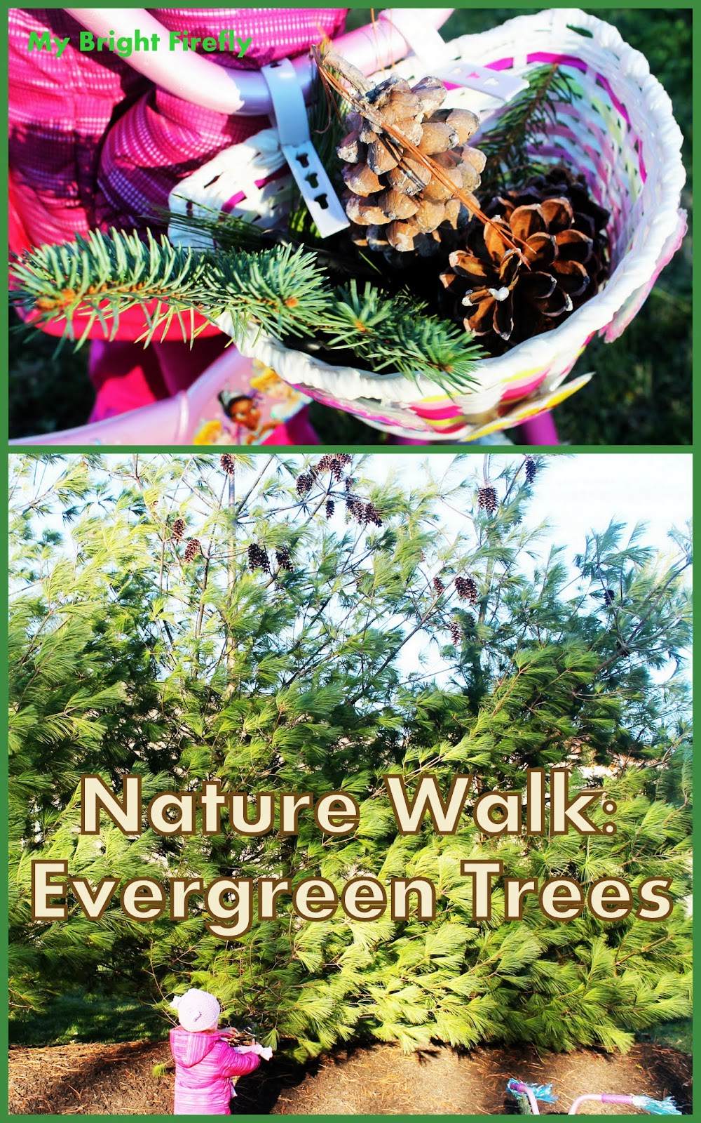 my bright firefly evergreen trees nature walk activities for kids