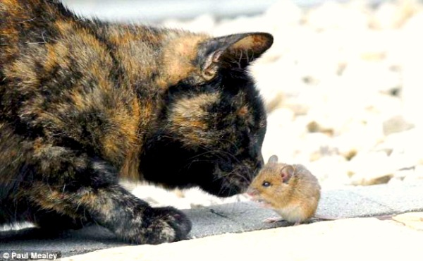 hamster and cat kissing