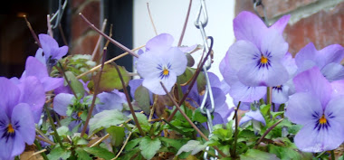 The sweet faces of pansies.