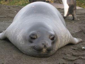 Elephant seals san simeon - ONLINE NEWS ICON