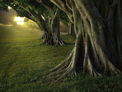 """""""Las tormentas hacen que los árboles tengan raíces firmes"""""""