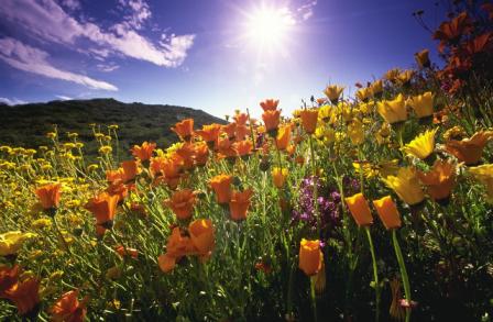 Three Benefits of God's Sunshine