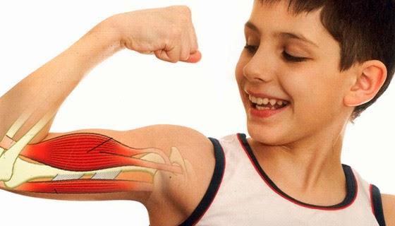 ciencias naturales: Sistema Muscular