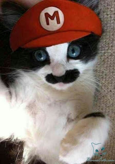 funny cat picture mario bros
