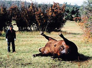 farm animals mutilation