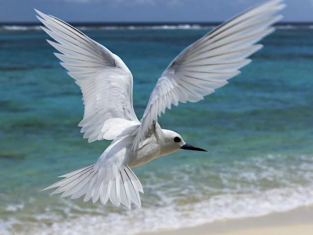 Beautiful White Bird Wallpaper