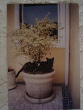 Nosso gato lindo Kacau